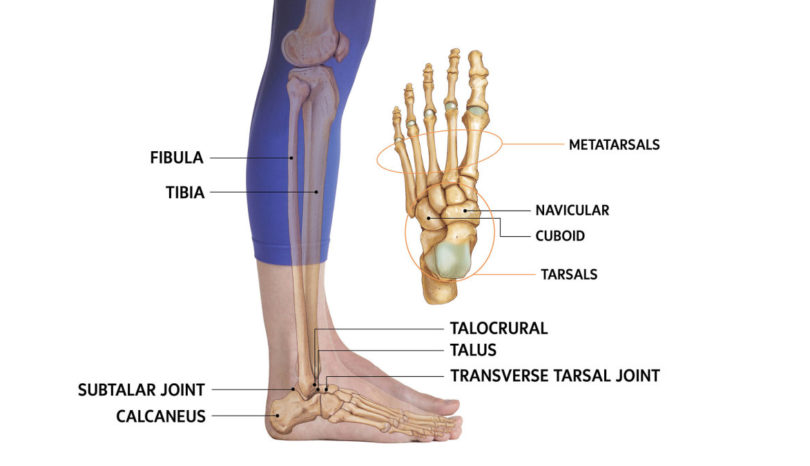 Injury of ankle joint